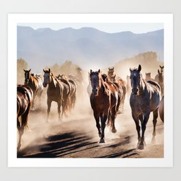 galloping horses  Art Print