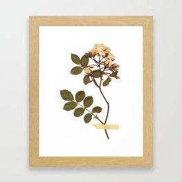 Vintage wild rose and washi tape Framed Art Print