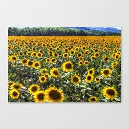 Sunflower Fields Of Summer Canvas Print