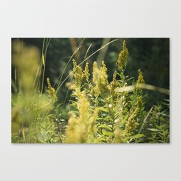 Mountain Meadows 03 Canvas Print