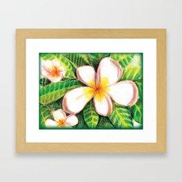 Plumeria Framed Art Print