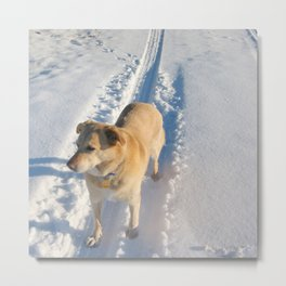 Dogs | Dog | Waiting Dog | Golden Lab Metal Print