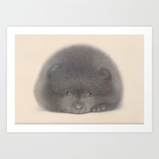 Black Pom puppy Art Print
