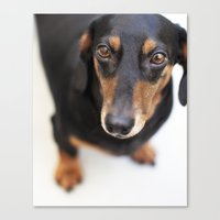 harley Canvas Prints featuring Harley by Sherman Photography