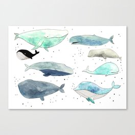 Blue whales Canvas Print