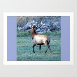 Big Elk Art Print