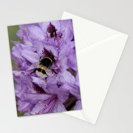 Patagonian bee Stationery Cards