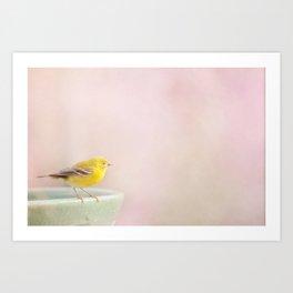 Little Pine Warbler Art Print