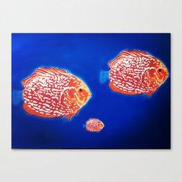 Fish family Canvas Print