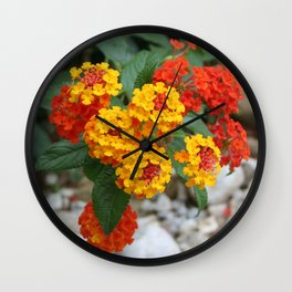 Macro Of Shrub Verbenas or Lantanas (Lantana Camara)  Wall Clock