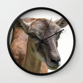 deer on white background Wall Clock