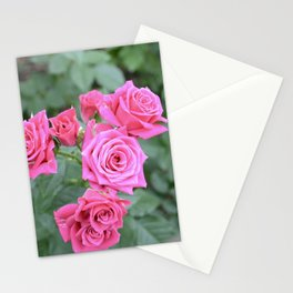 Wintry Roses Stationery Cards