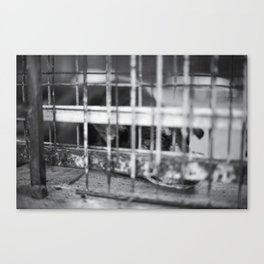 Caged & Forgotten  Canvas Print