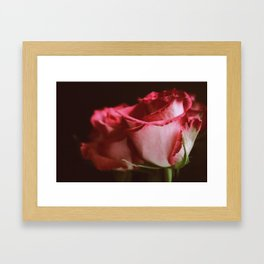 Roses No.1 Framed Art Print