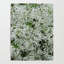 TEXTURES: White on Green Poster