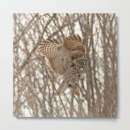 Feather Weight Metal Print