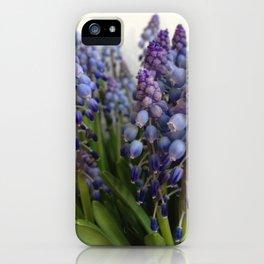 Grape hyacinths iPhone Case