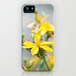 St John's wort iPhone Case
