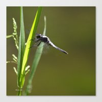dragonfly Canvas Prints featuring Dragonfly by Christina Rollo
