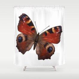 European Peacock Butterfly Shower Curtain