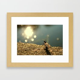 Pond Watcher Framed Art Print