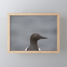 Portret of a Guillemot | Uria aalge | Farne Islands, UK | Fine art bird photography Framed Mini Art Print