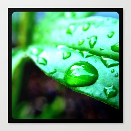 Macro leaves and water droplets. Canvas Print
