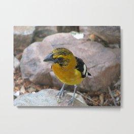 Yellow bird Metal Print