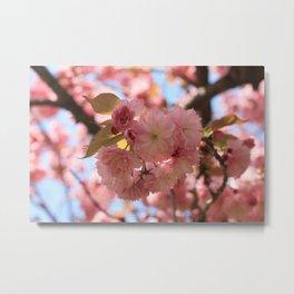 Cherry Blossom II Metal Print
