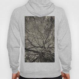 The old oak tree Hoody
