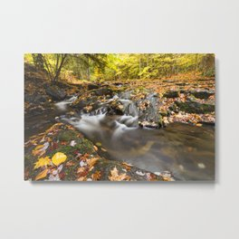 Mountain creek and golden autumn leaves Metal Print