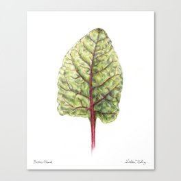 Swiss Chard Canvas Print