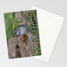 A White Throated Sparrow Stationery Cards