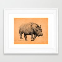 hippo Framed Art Prints featuring Hippo by 1 of 20