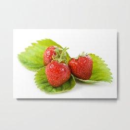 Three fresh strawberries fruits lying Metal Print