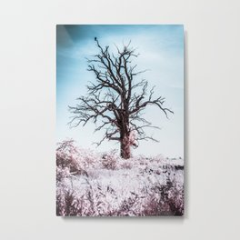 Crow On The Frosted Tree, Michigan Metal Print