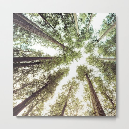 Green Forest Sky Trees Metal Print