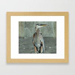 Great Blue Heron Photography Print Framed Art Print