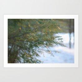 hemlock in a golden winter Art Print