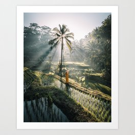 Rice Terrance Sunrise Art Print