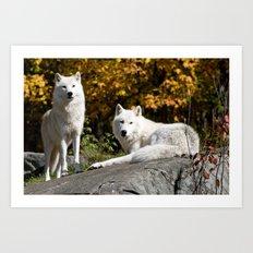 Arctic Wolf On Rocks Art Print