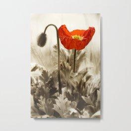 Poppy Red 0171 Metal Print