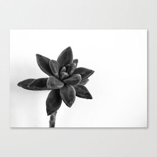 flower cactus Canvas Print