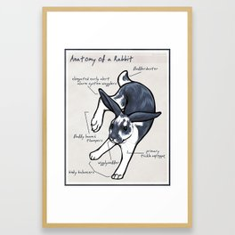 Anatomy of a Rabbit Framed Art Print