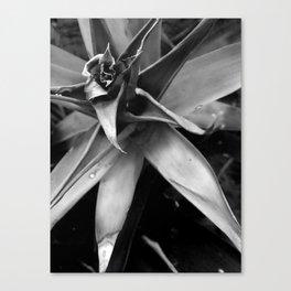Flower | Flora | Black and White Canvas Print