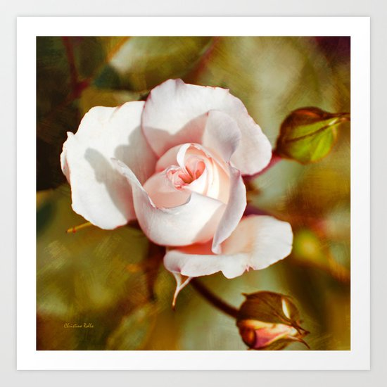 Antique Rose Art Print