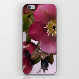 Christmas Rose iPhone Skin