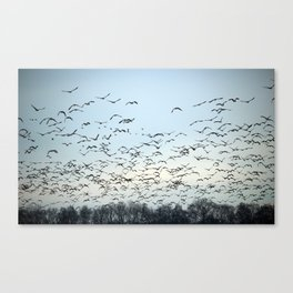 Moving to south Canvas Print