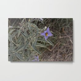 New Mexico Wildflower Metal Print