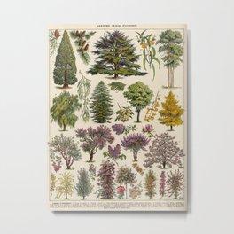 Adolphe Millot Garden Trees Vintage Scientific Illustration Old Le Larousse pour tous llustration Metal Print